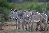 D31_0430a