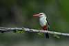 D31_7944