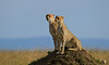D31_3780