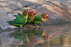 D31_1778