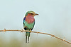 D31_2994