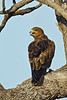 D31_2982